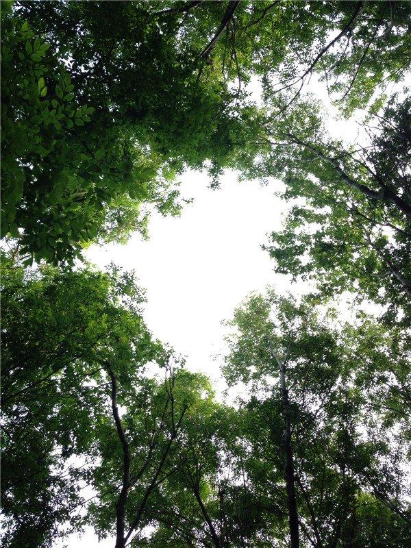 图文馆(23) | 每个人都有属于自己的一片森林