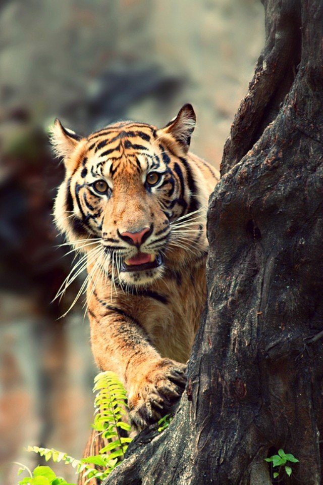 村上春树与中国老虎的故事